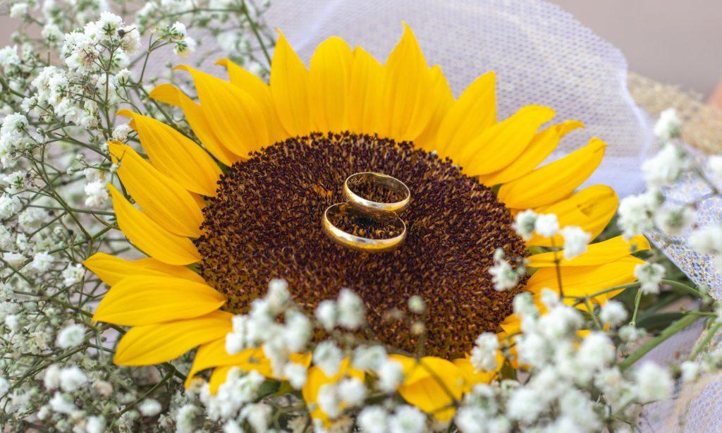 обручальные кольца на подсолнухе